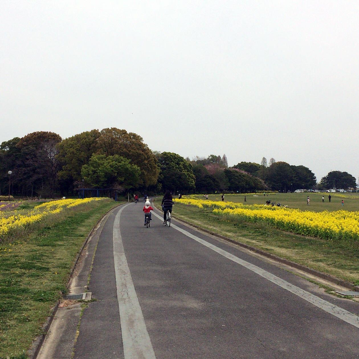 黄色い花-庄内緑地