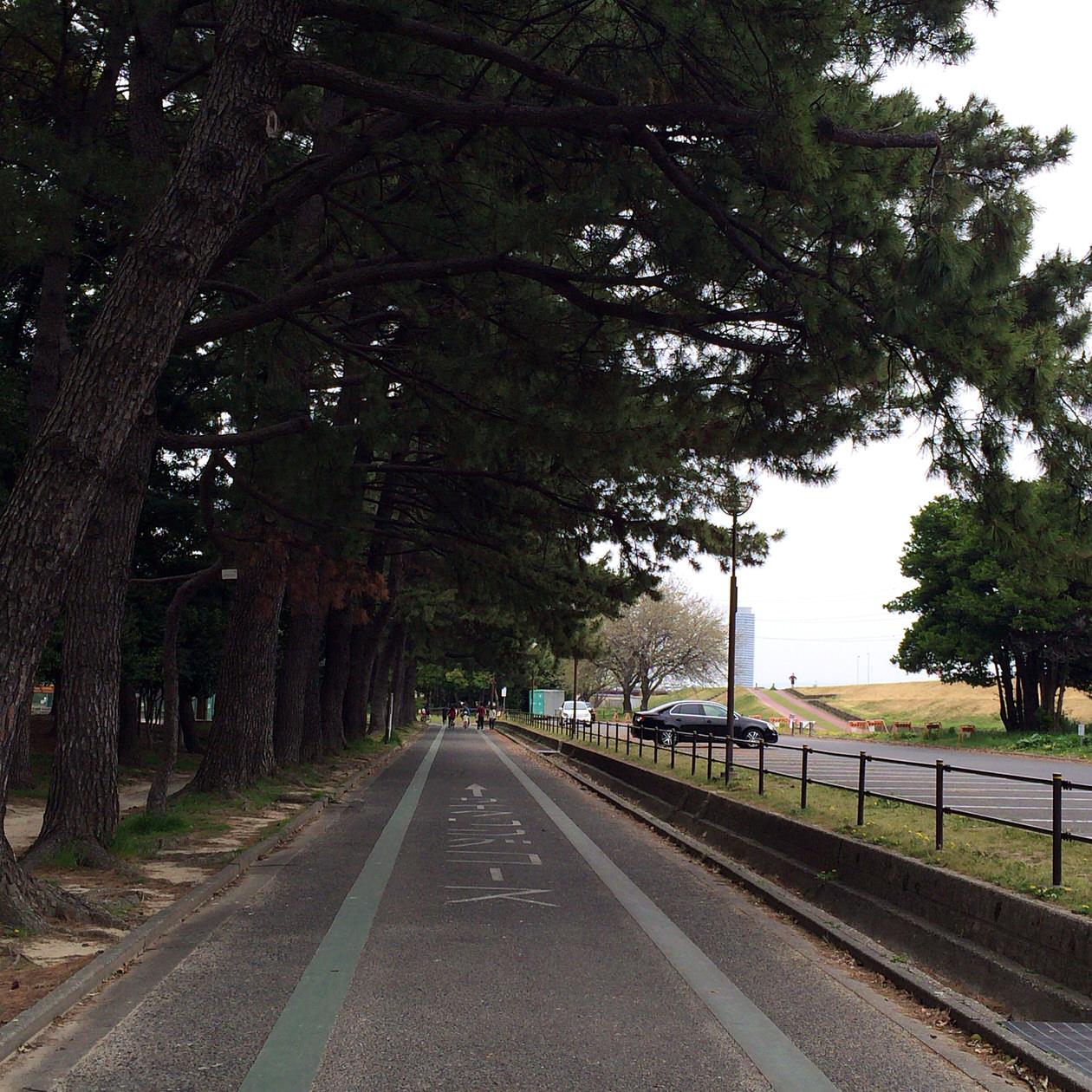 松-コース
