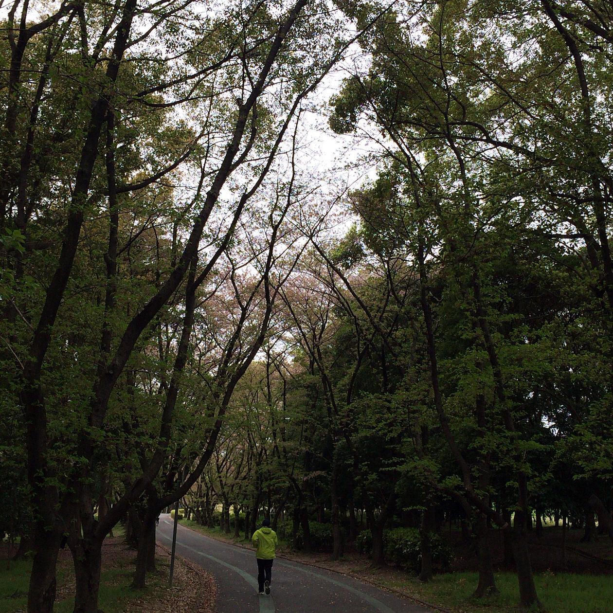 森林-コース