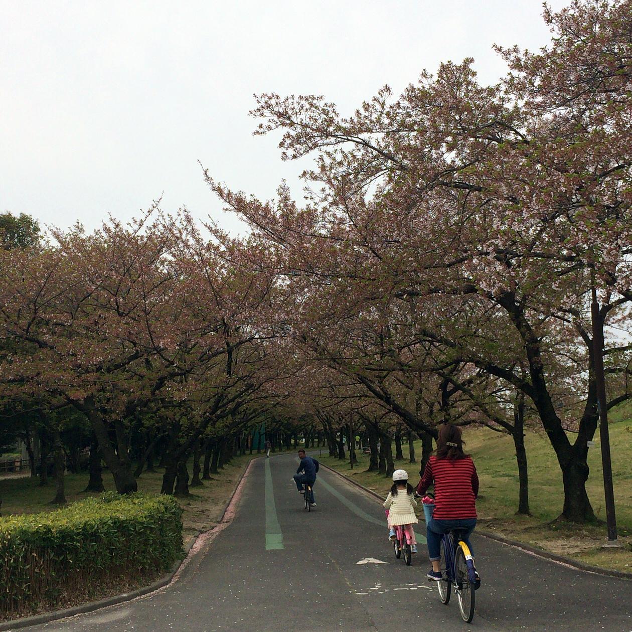 庄内緑地-桜