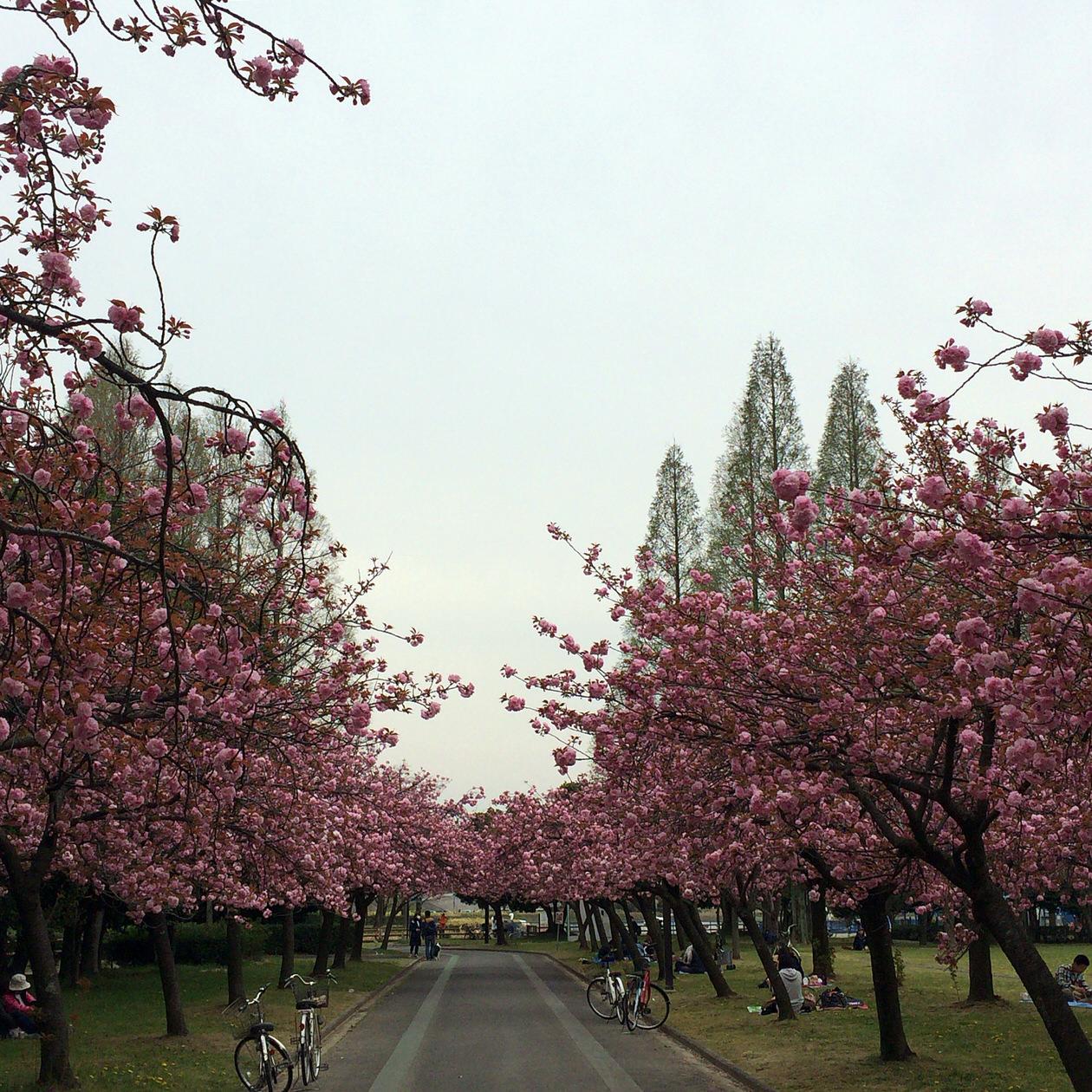 名古屋市内でランニングをするなら『庄内緑地』で決まり!