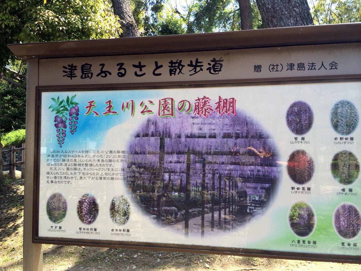 津島市の天王川公園の『藤まつり』でキレイな藤棚を見てきたよ!