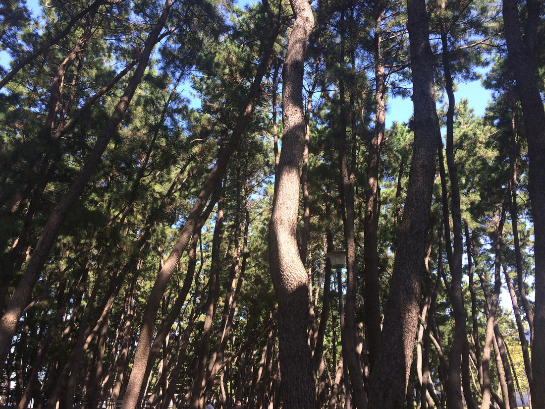 野鳥観察館-松の木