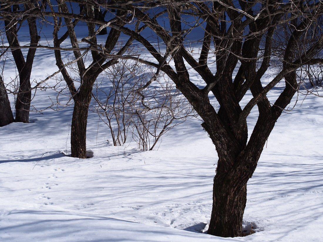 冬こそ運動をした方が良い3つの理由