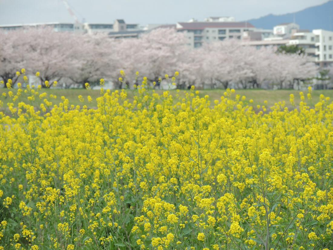 春は花粉の季節!マスクをしてランニングして肺活量アップ!